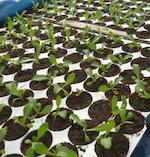MoeysConsulting_Agribusiness project_Nursery_Plantpropagation_Nigeria
